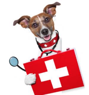 dog medical