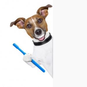 dog tooth brush